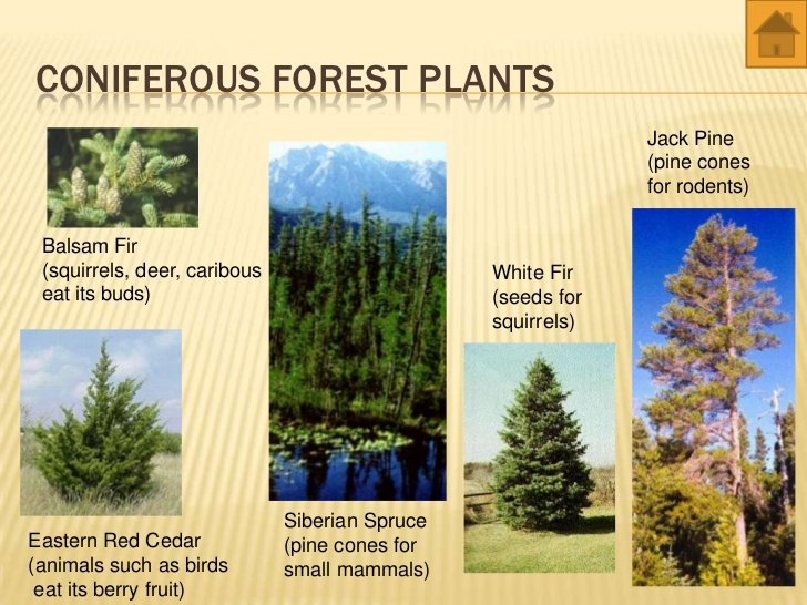 Temperate Forest Plants List